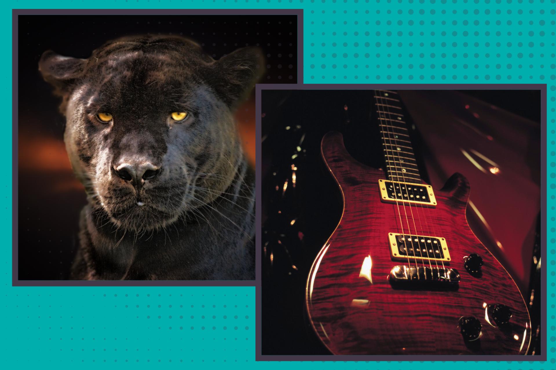 A Tale of Two Celebrities: Chadwick Boseman and Eddie Van Halen